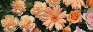 供花の種類